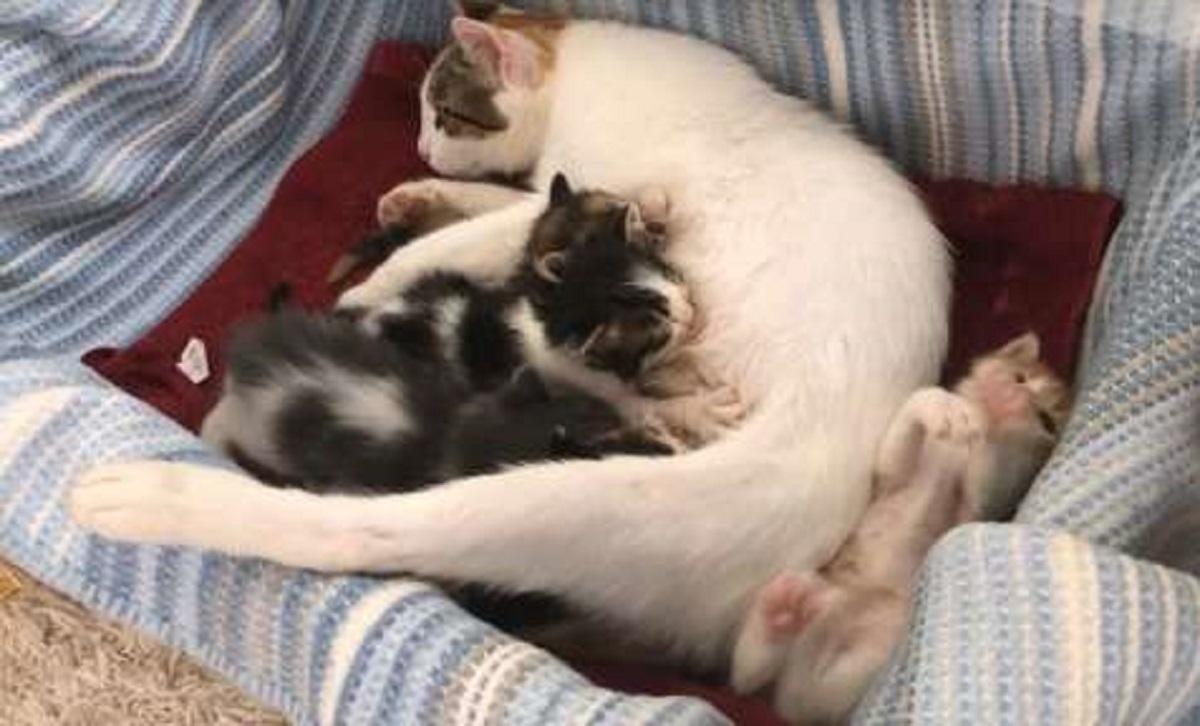 chery gatta trova casa famiglia