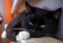 gatto su termosifone