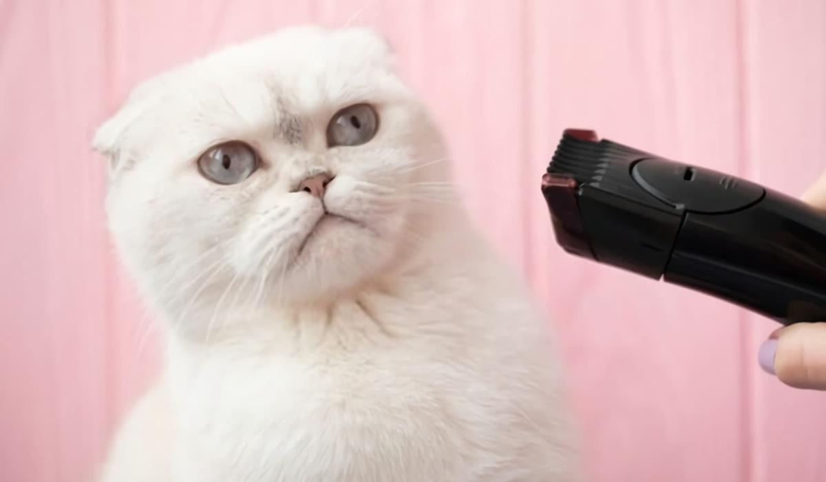 gatto che ha paura del rasoio