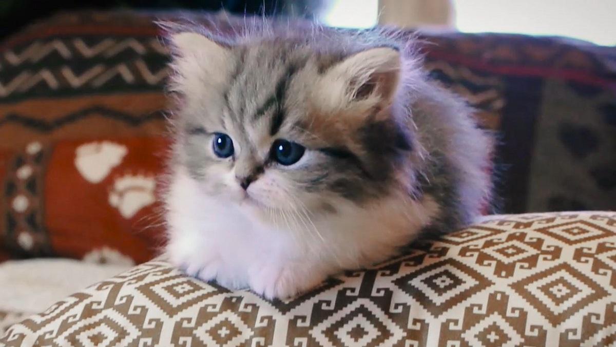 gattino disteso su poltrona
