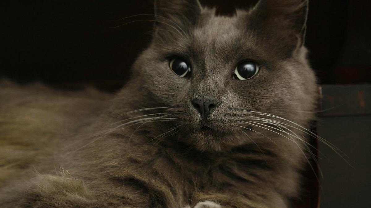 gatto grigio seduto