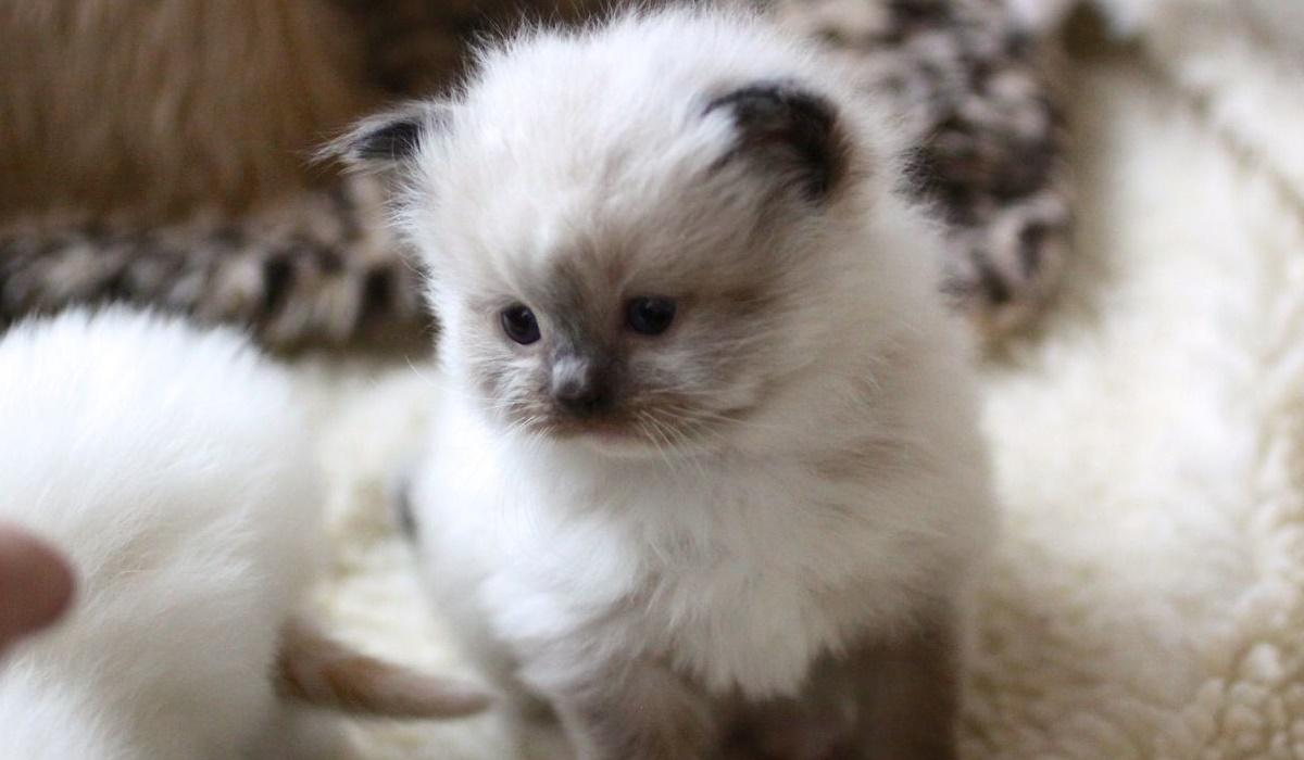gattino di poche settimane