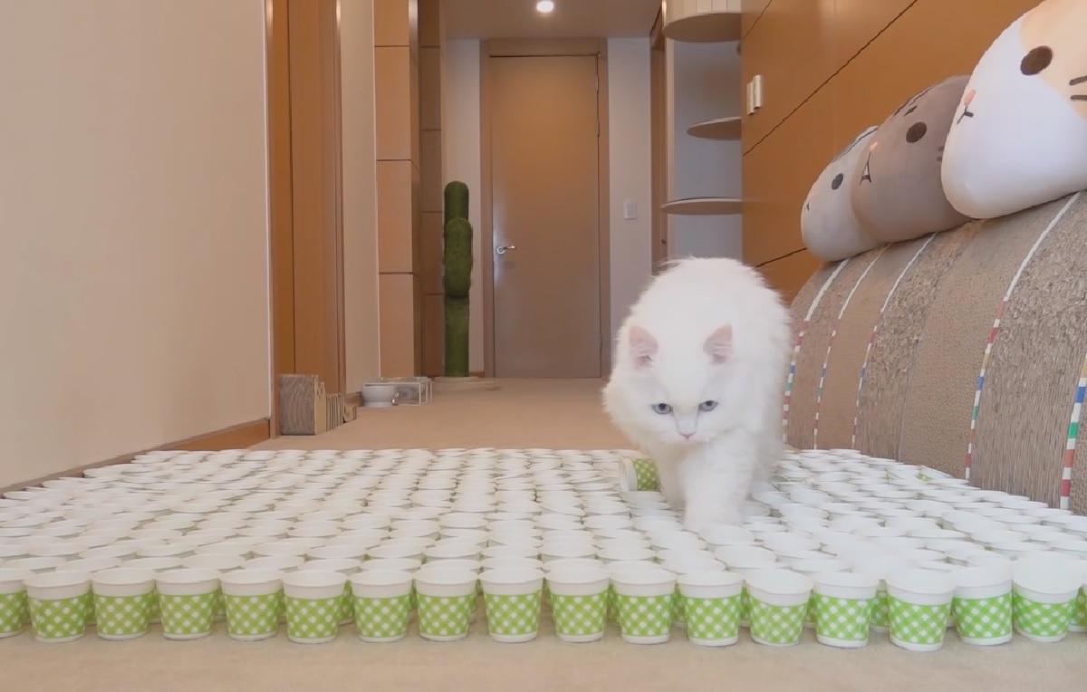 gattini proprietaria idea sfida bicchieri
