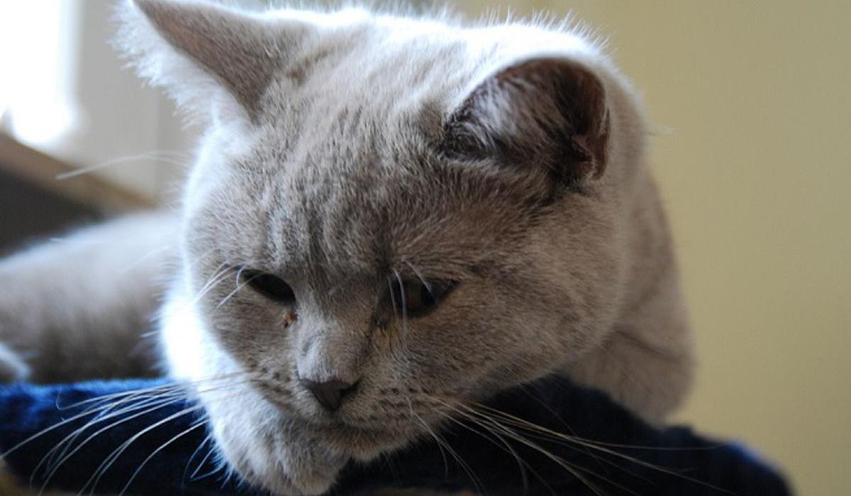 gatto triste