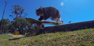 didga gattino skateboard
