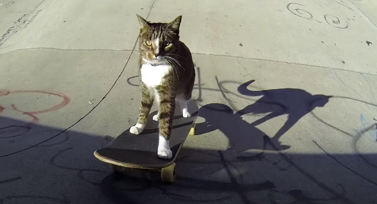 micio skateboard abilità