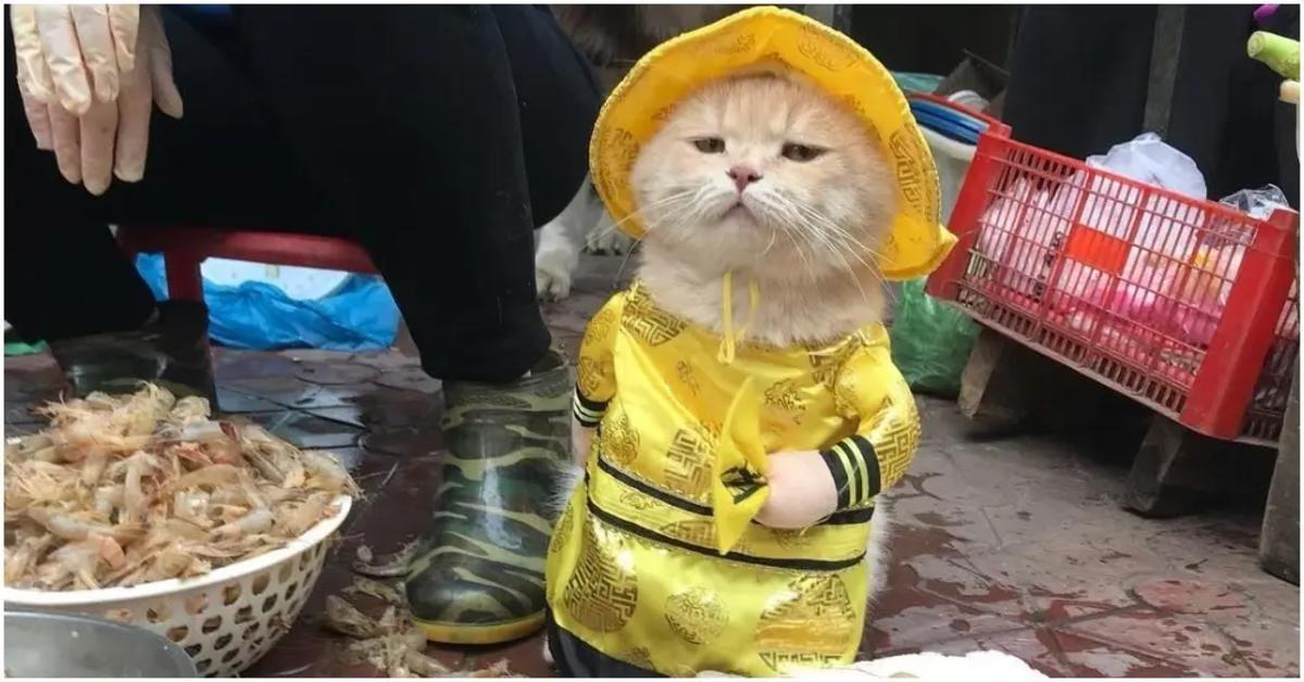 Dog , gattino che vende il pesce in vietnam