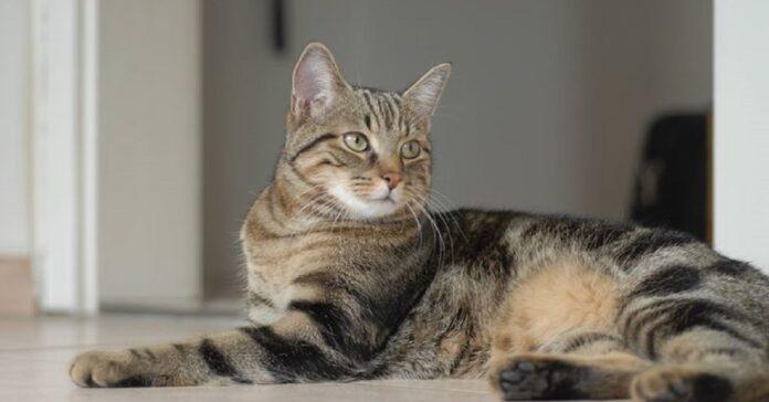 mike gatto vagabondo