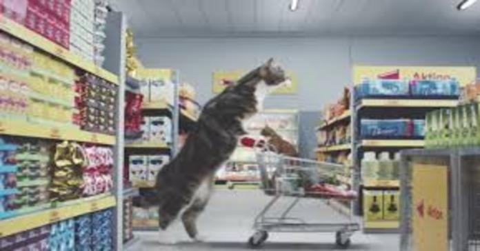 gattino con carrello