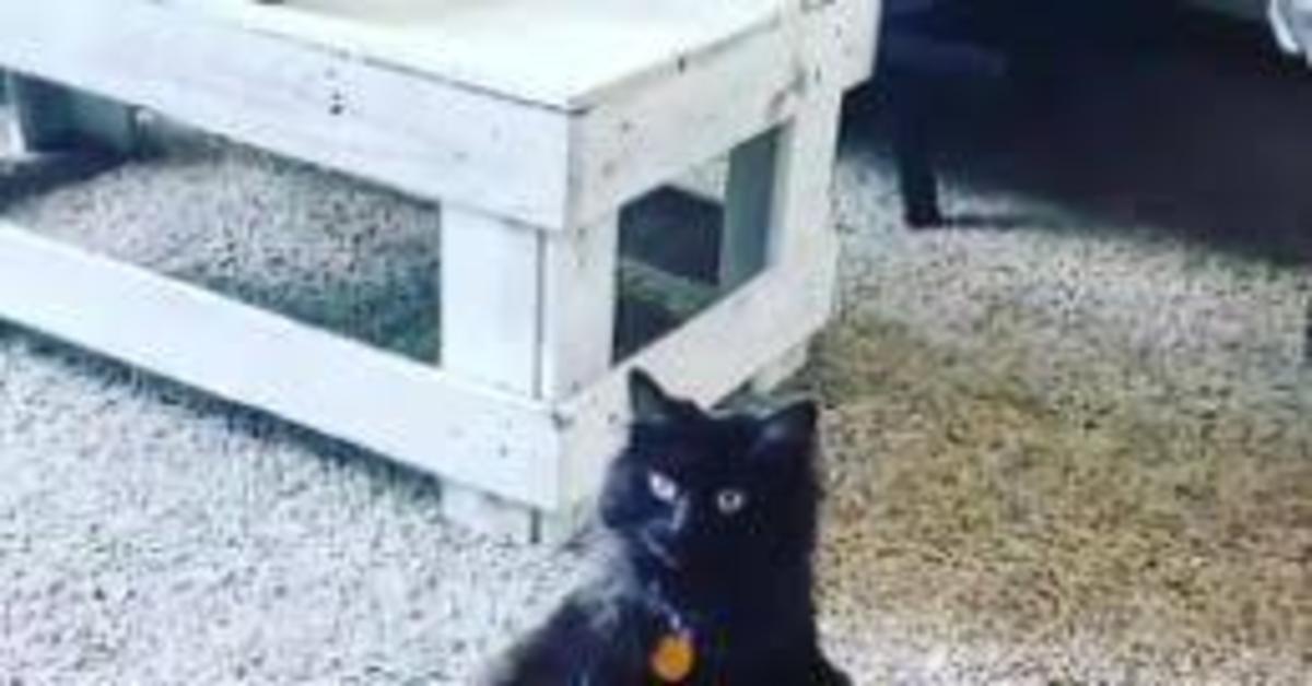 gatta seduta come essere umano