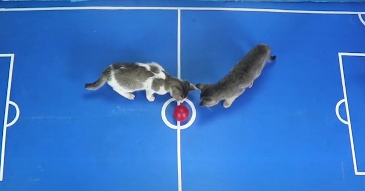 gattini incontro match