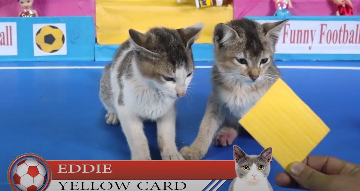 ammonizione gattino gioco