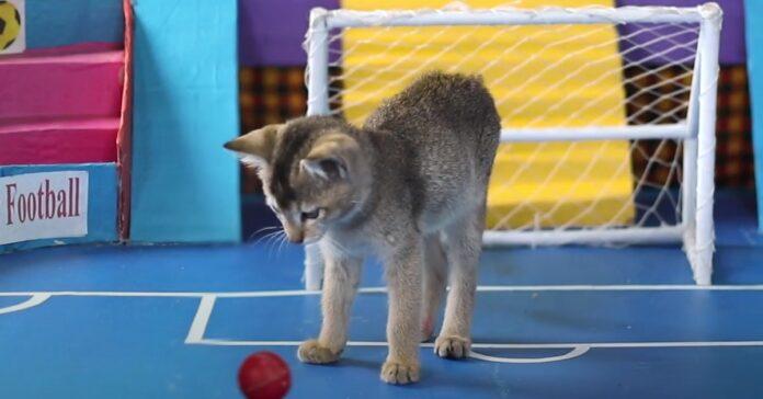 gattini calcio gioco
