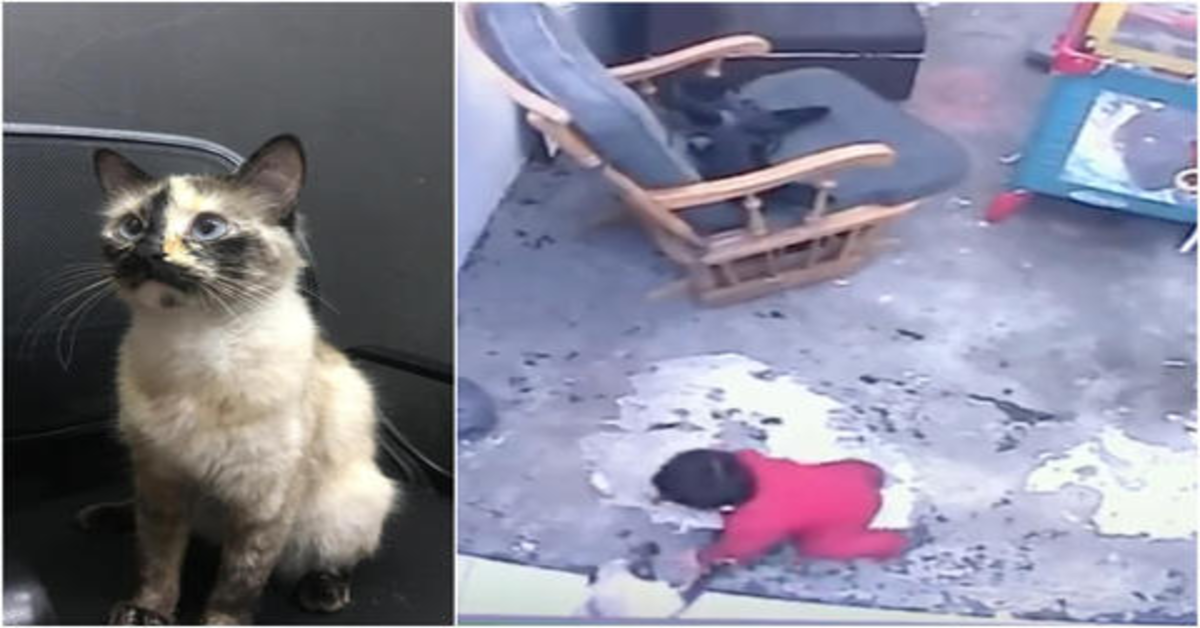 gatta salva bimbo che sta cadendo dalle scale