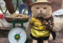 Dog gatto pescivendolo