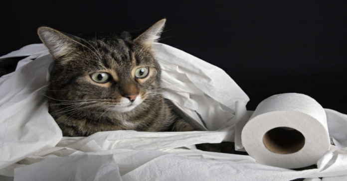 gatto con carta igienica