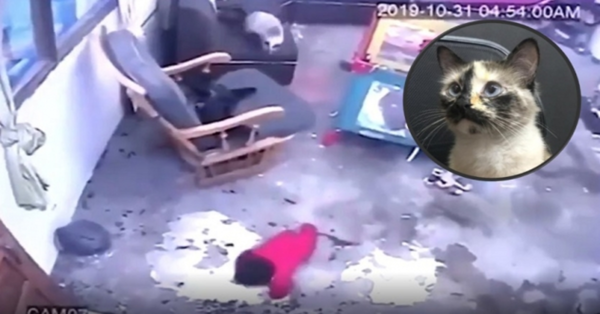 gatitna salva bimbo che sta per cadere dalle scale telecamera