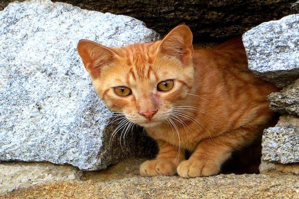 gatti che leccano muri e plastica