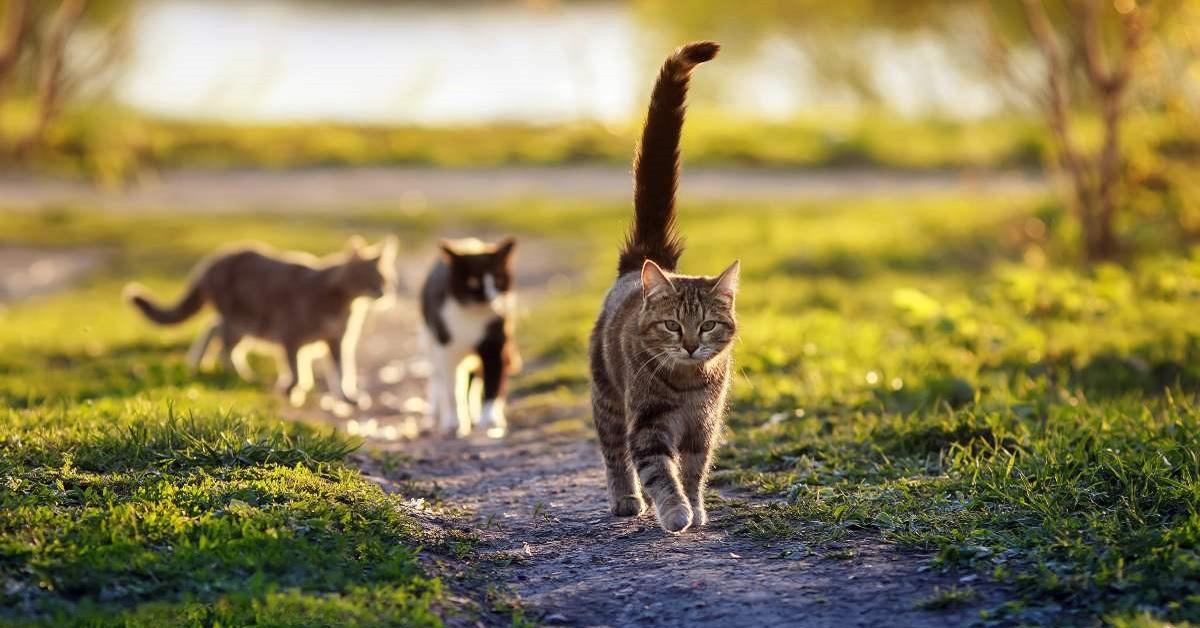 gatti su strada di campagna