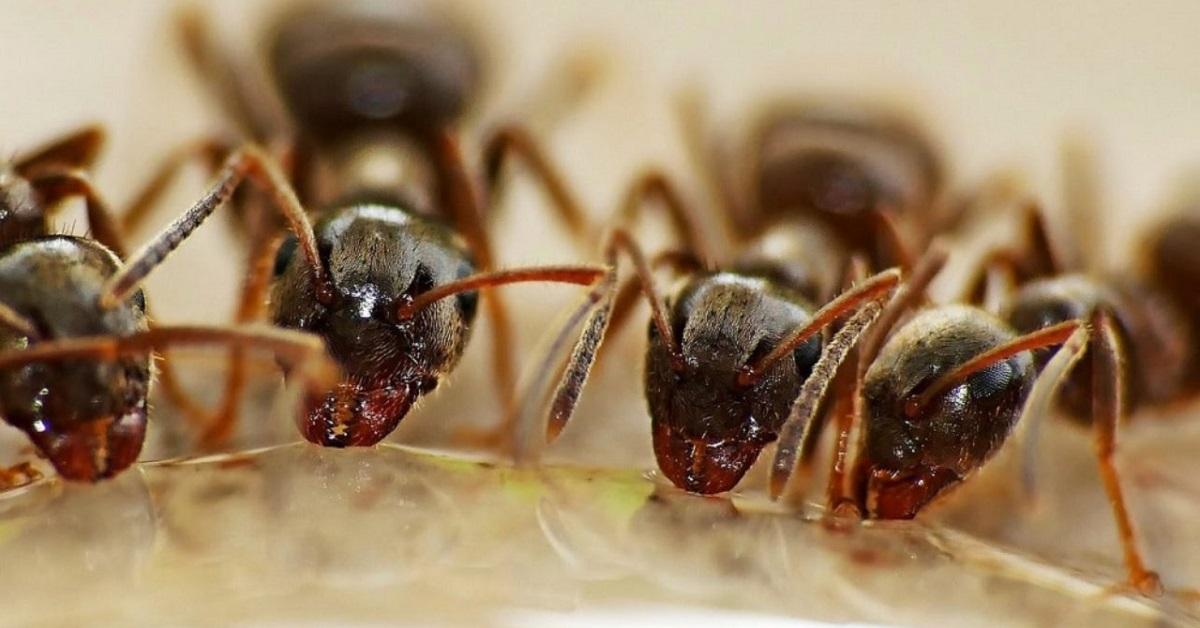 formiche per gatti