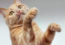 gatto cattura insetti