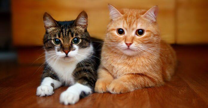 gatti che vivono insieme