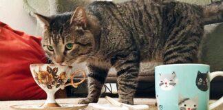 gatto che beve il tè dalla tazza