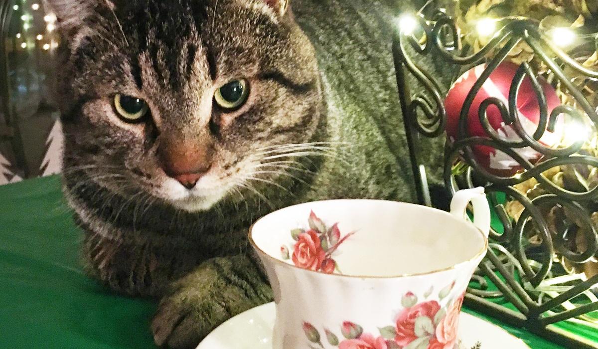gatto con tazza di tè