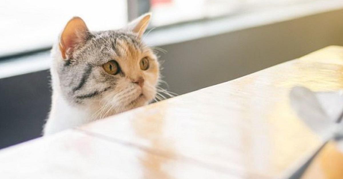 gatto aspetta pappa