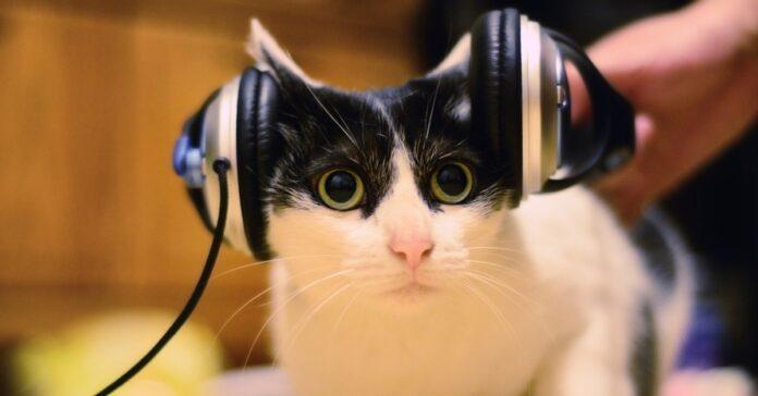 gatto che ascolta la musica