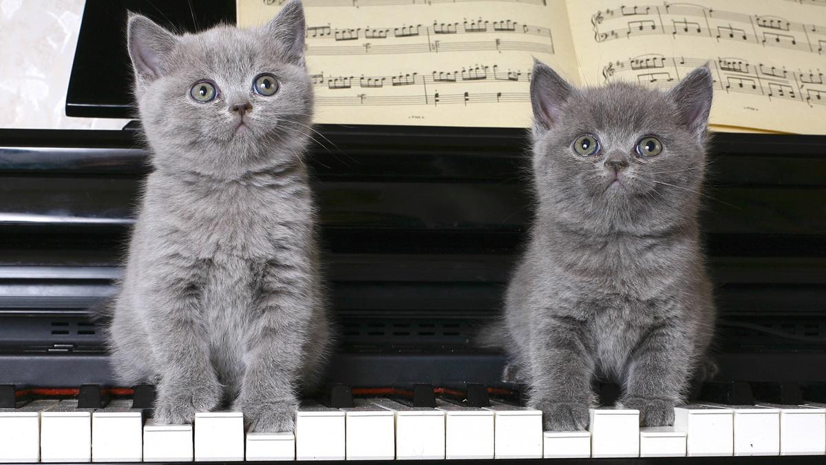 gattini sul pianoforte
