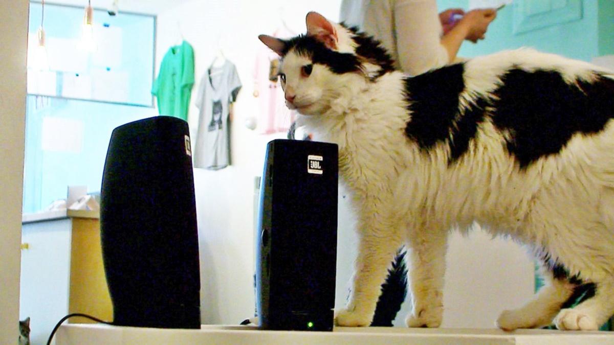 gatto accanto alle casse