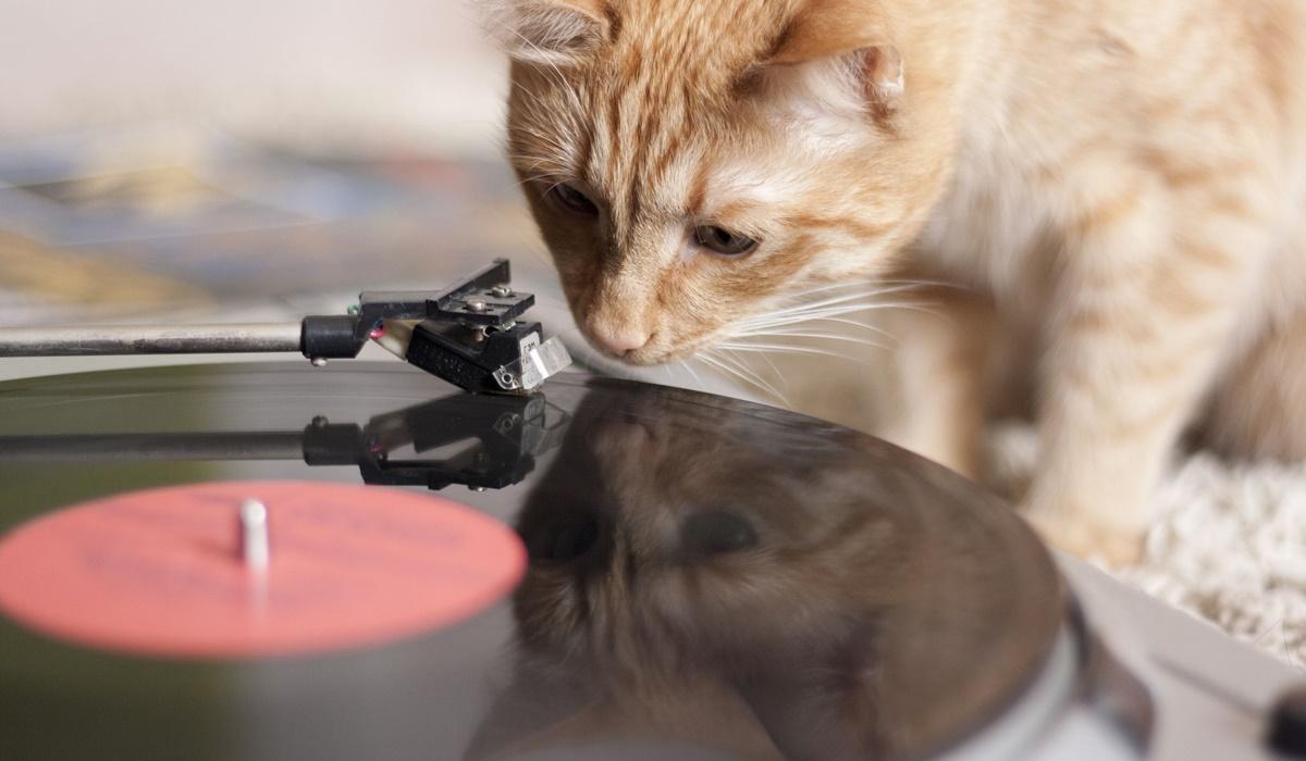 gatto con il giradischi