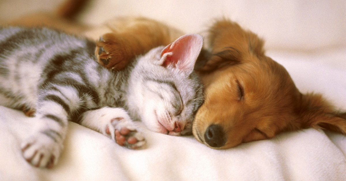 cane e gatto dormono abbracciati