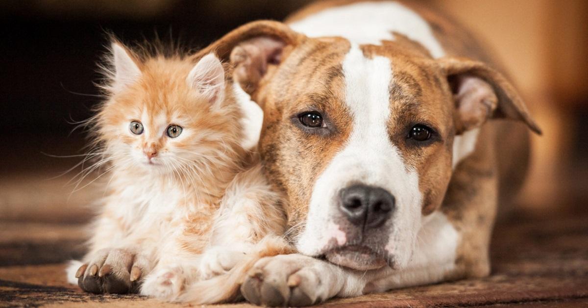 cane accanto a un gattino