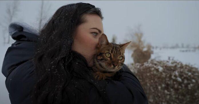 gattina del Bengala sulla neve