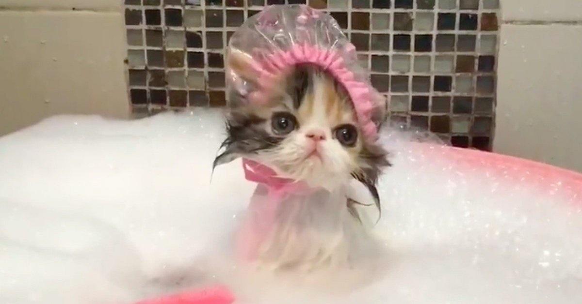 gattino durante il bagnetto