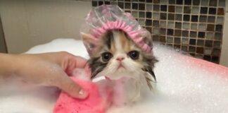 gattino fa il bagnetto