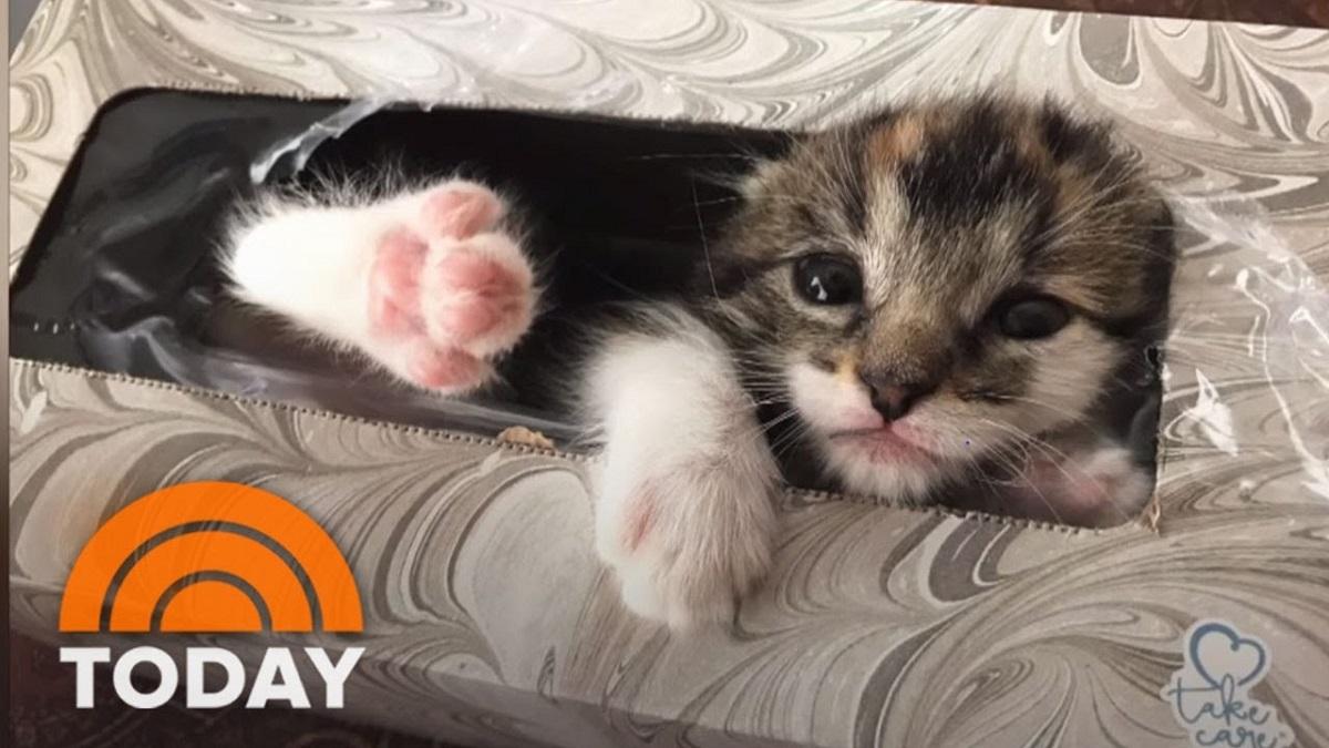 gatto dentro scatola di fazzoletti