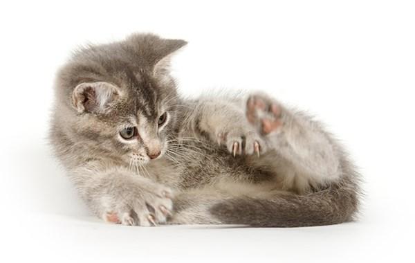 gattini giocano con coda video lascia bocca aperta