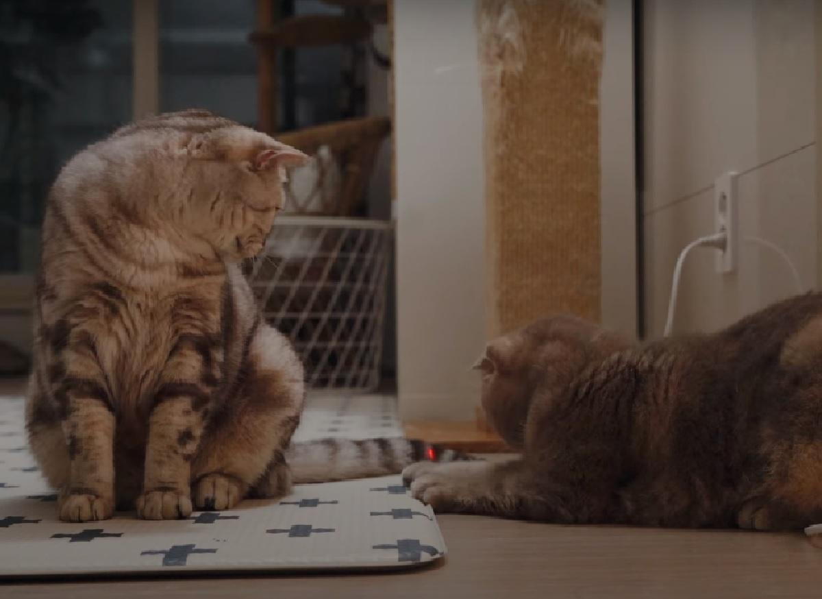 gattini iz e suri giocano laser