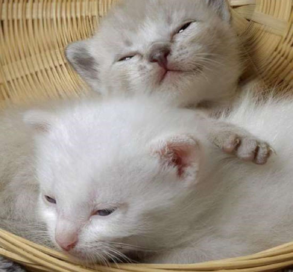 roxy mamma gattini adottivi