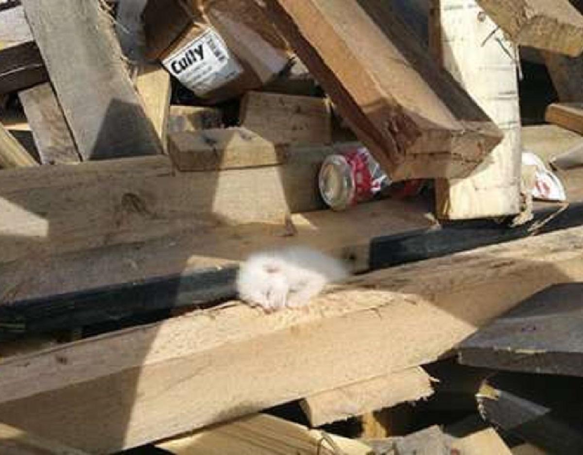 cliff salvataggio gattini sotto legna