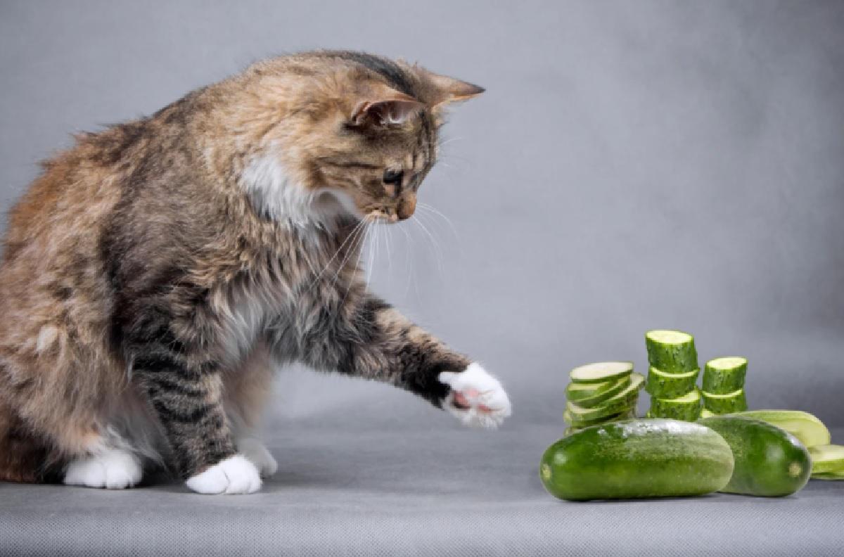gattini paura di molte cose