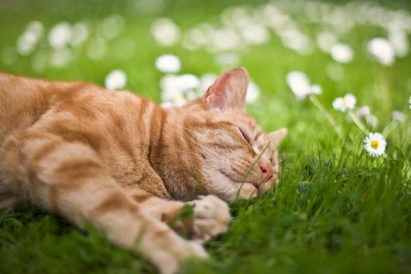 gattini sui prati foto