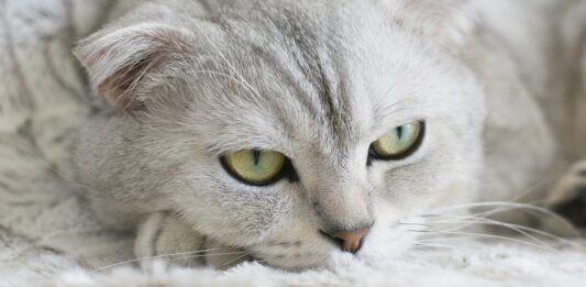 gattino bassotto
