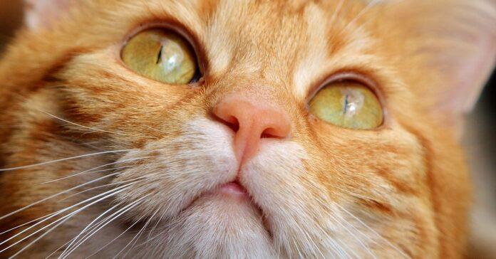 gattino che miagola quando sente il suo nome