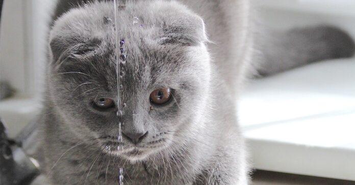 gattino che non sa bere dal lavandino (1)