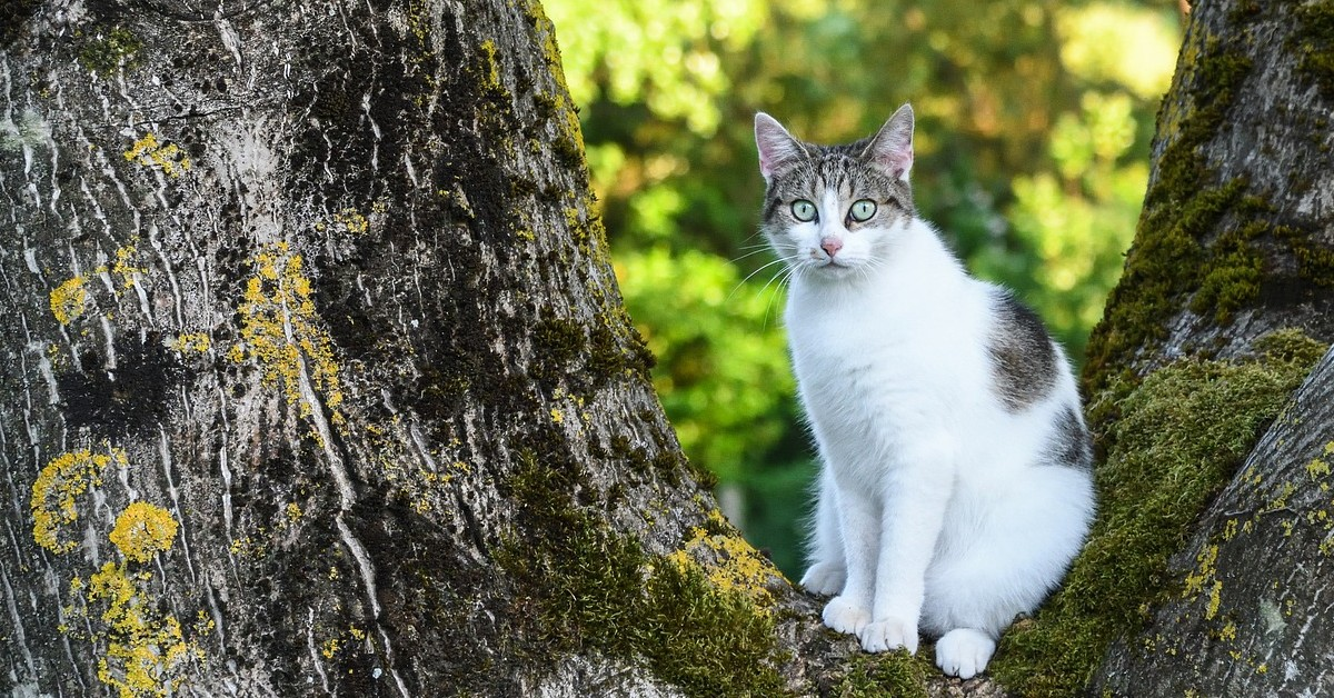 gattino che scende dall'albero per farsi coccolare