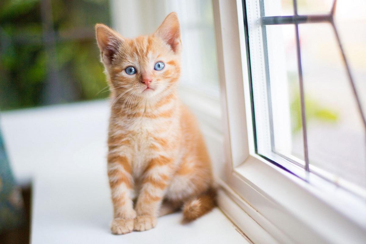 cucciolo di gatto vicino alla finestra